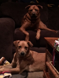 Delilah and Toby